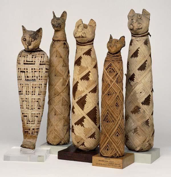 mummified-egyptian-cats