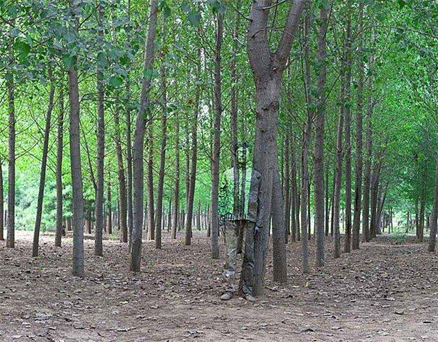 liubolin6-trees