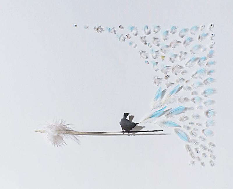 feather-dioramas-chris-maynard-7-800x650
