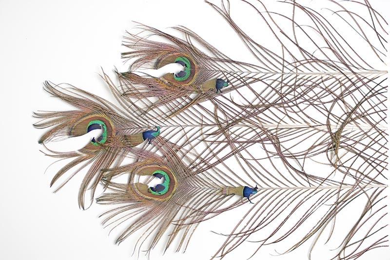 feathers-chris-maynard-3