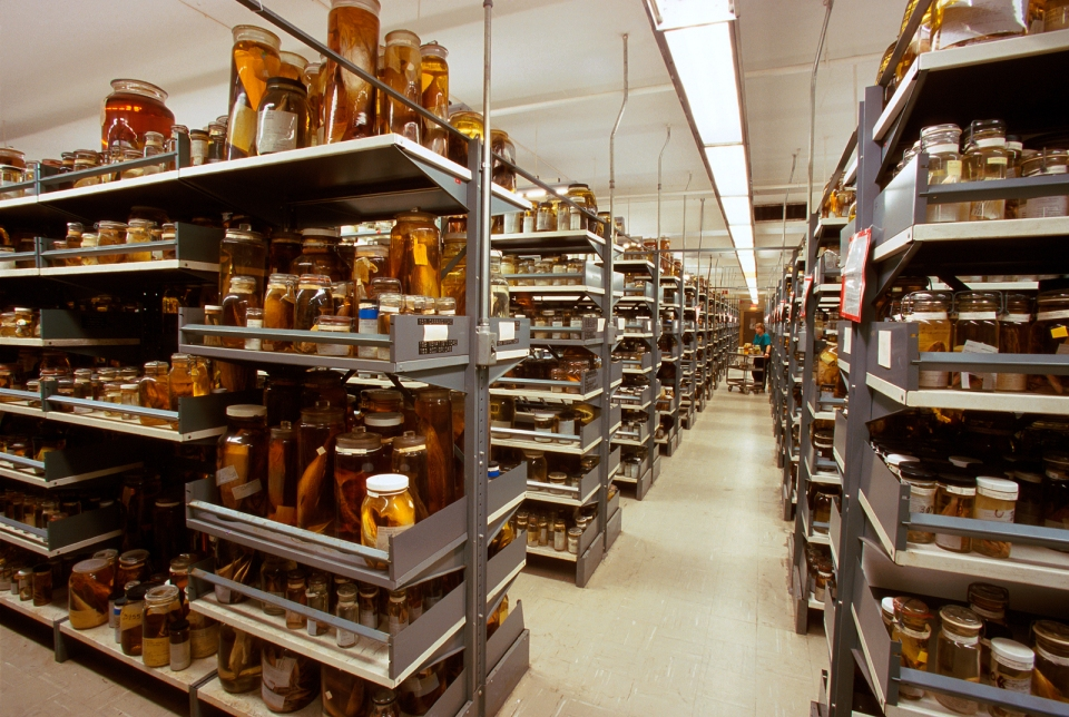 Fish Collections in Alcohol, National Museum of Natural History
