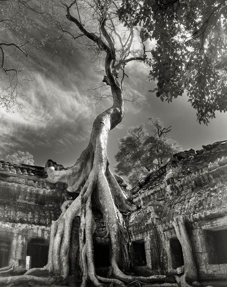 beth-moon-ancient-trees-11