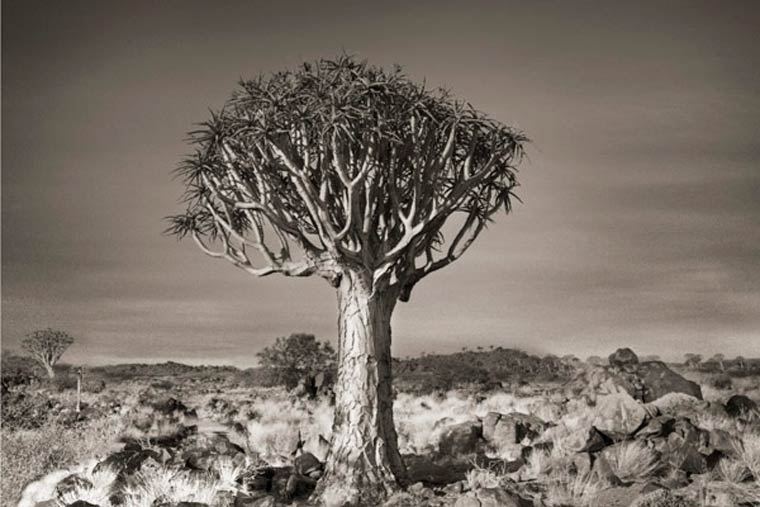 beth-moon-ancient-trees-2