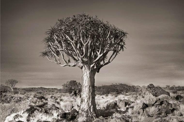 beth-moon-ancient-trees-2