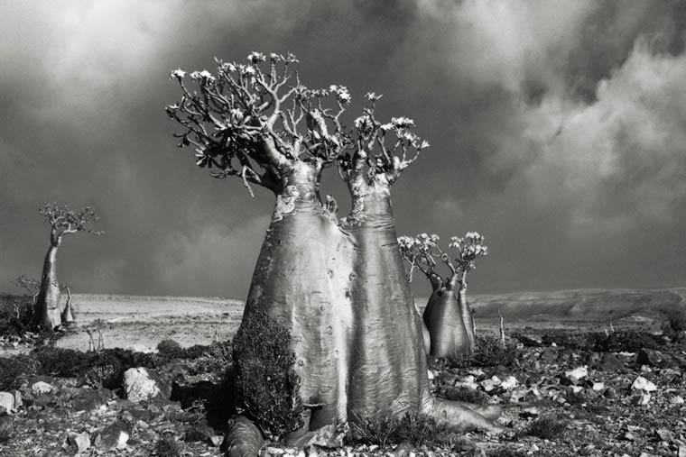 beth-moon-ancient-trees-3