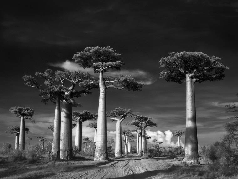 beth-moon-ancient-trees-4