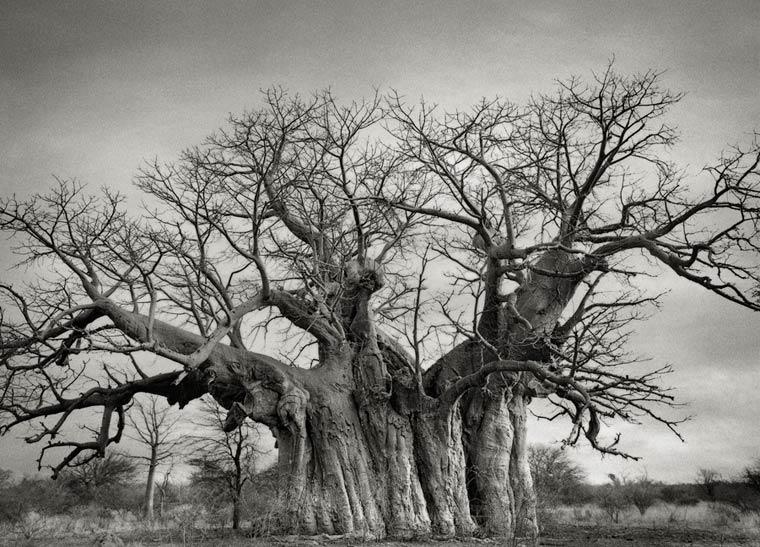 beth-moon-ancient-trees-5