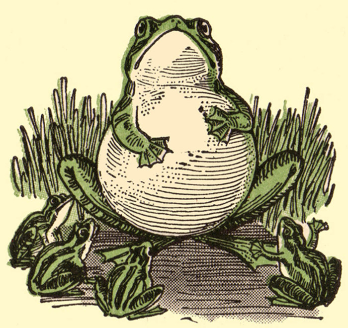 public-domain-frog-illustration-16