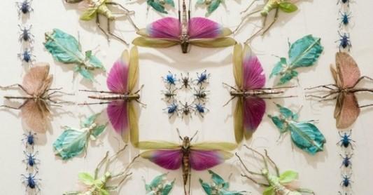 Insect-Fantasia-Jennifer-Angus-7-706x369
