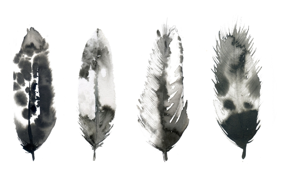 Feathers watercolour illustration, leona beth