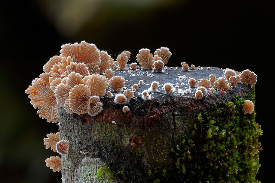 fungi-mushrooms-photography-steve-axford-5